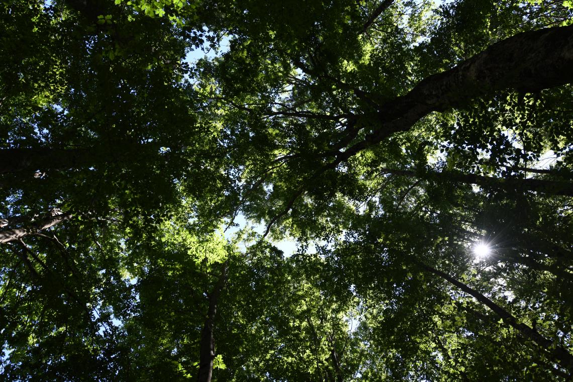 I boschi italiani crescono e assorbono sempre più anidride carbonica