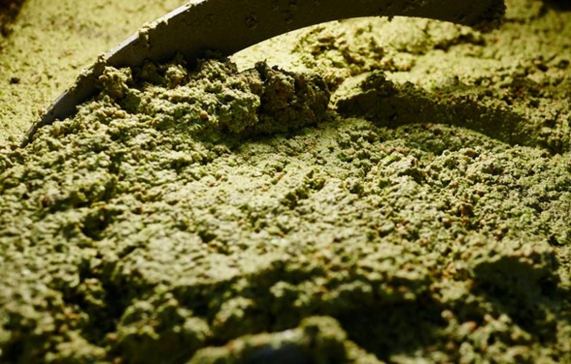 La formazione di etanolo durante la gramolazione della pasta d'olive