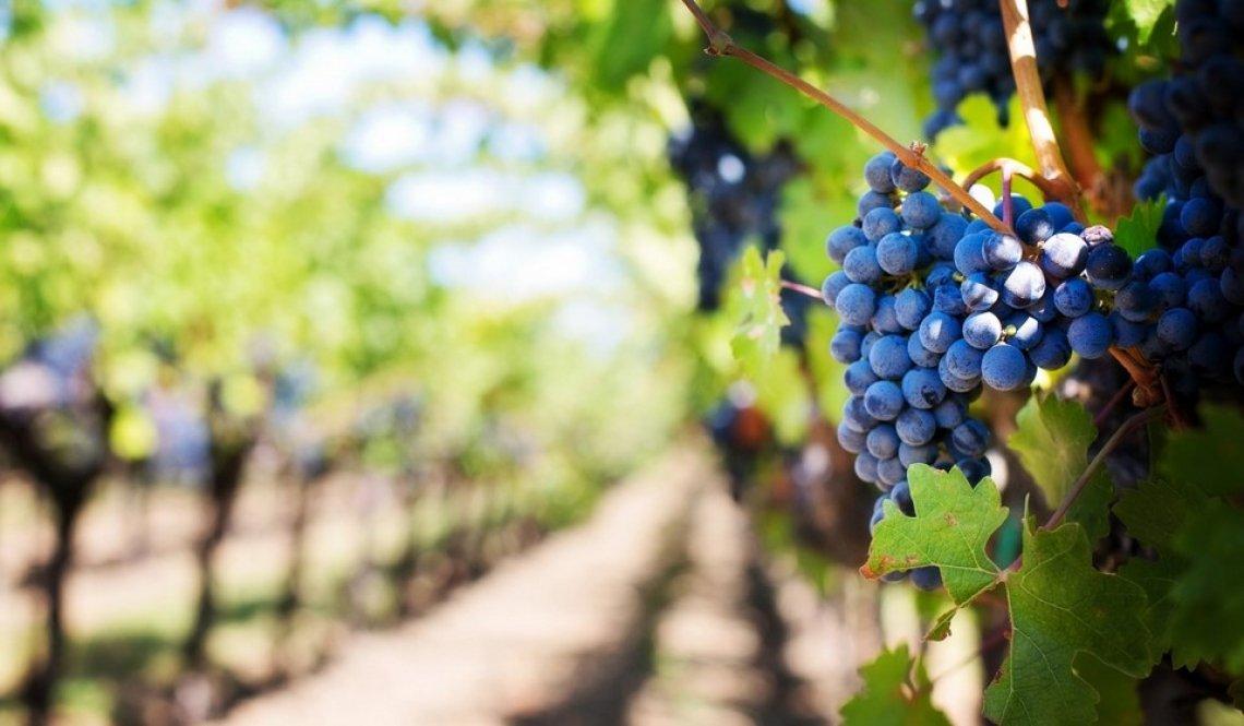 Diversità e dinamica dei lieviti durante le fermentazioni spontanee e associazione con profili aromatici unici nel vino