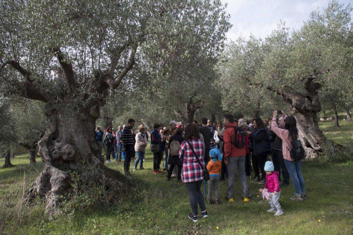 In 141 città in Italia si cammina in nome dell'olivo