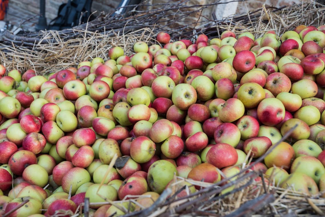 La mela rosa è donna! Al via la festa del frutto di montagna ancestrale