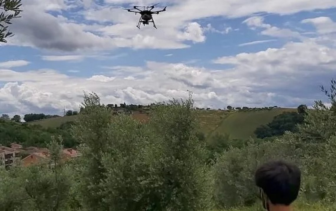 Contro la mosca delle olive ci si affida al drone