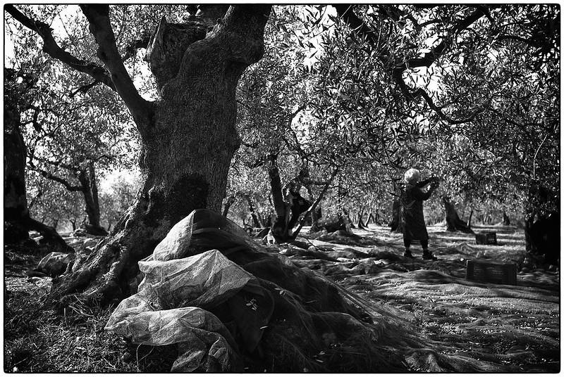 Foto di Giovani Picuti