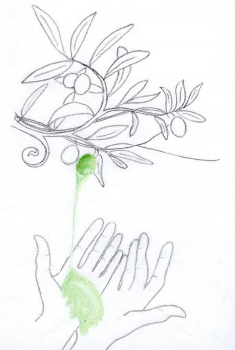 Il mio amico olivo, Olio Capitale - Illustrazione di Alice Jez