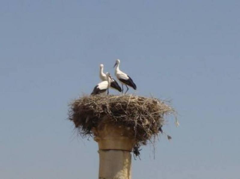 Un nido a Volubilis - foto di Luigi Caricato