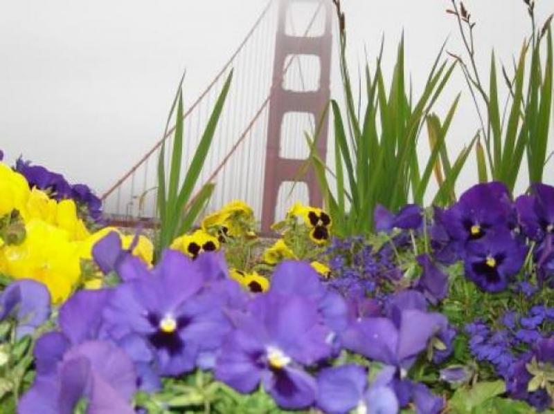 San Francisco. Uno sguardo sul ponte - foto di Luigi Caricato