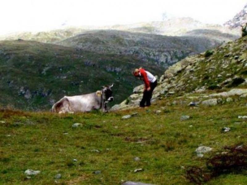 Parlami o mucca - Foto di Paola Cerana