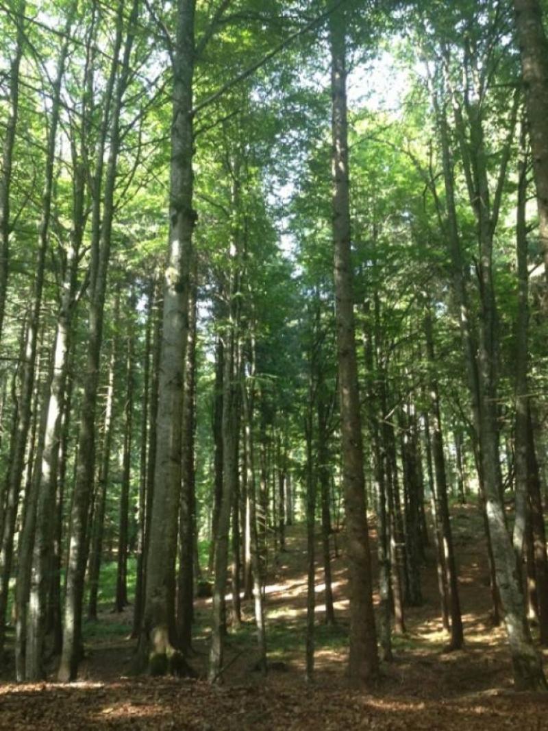 Recuperare il rapporto con bosco e natura
