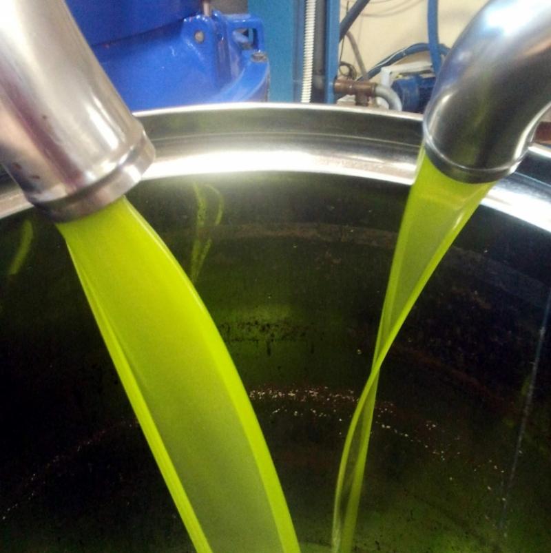 L'olio che sgorga dal separatore è sempre una festa