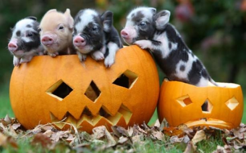 Un Halloween speciale a Selva Reale