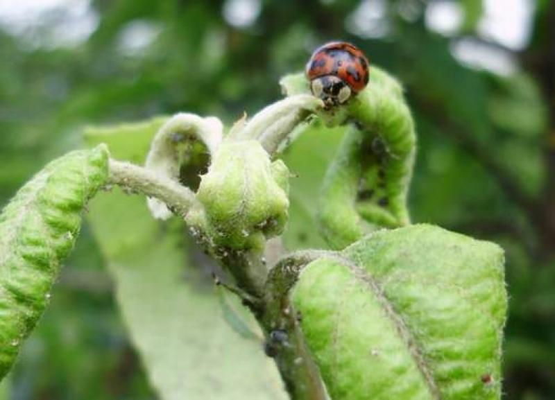 L'equilibrio naturale in un agroecosistema è possibile?