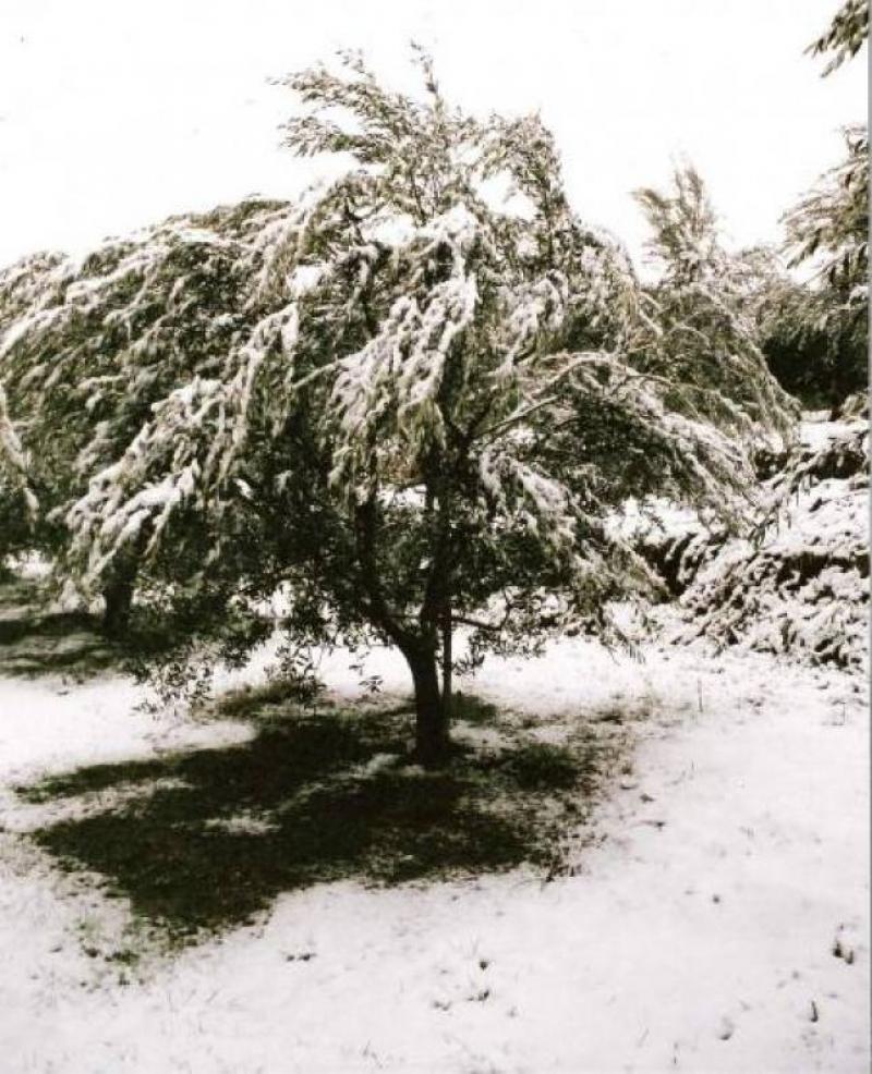 L'inverno ricopre gli olivi - Katja Marzi