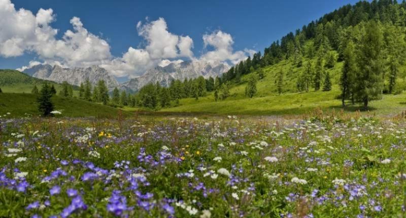 Carnia, la regione più ricca d'Europa dal punto di vista botanico