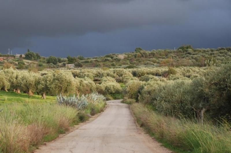 Nubi di tempesta sugli oliveti italiani
