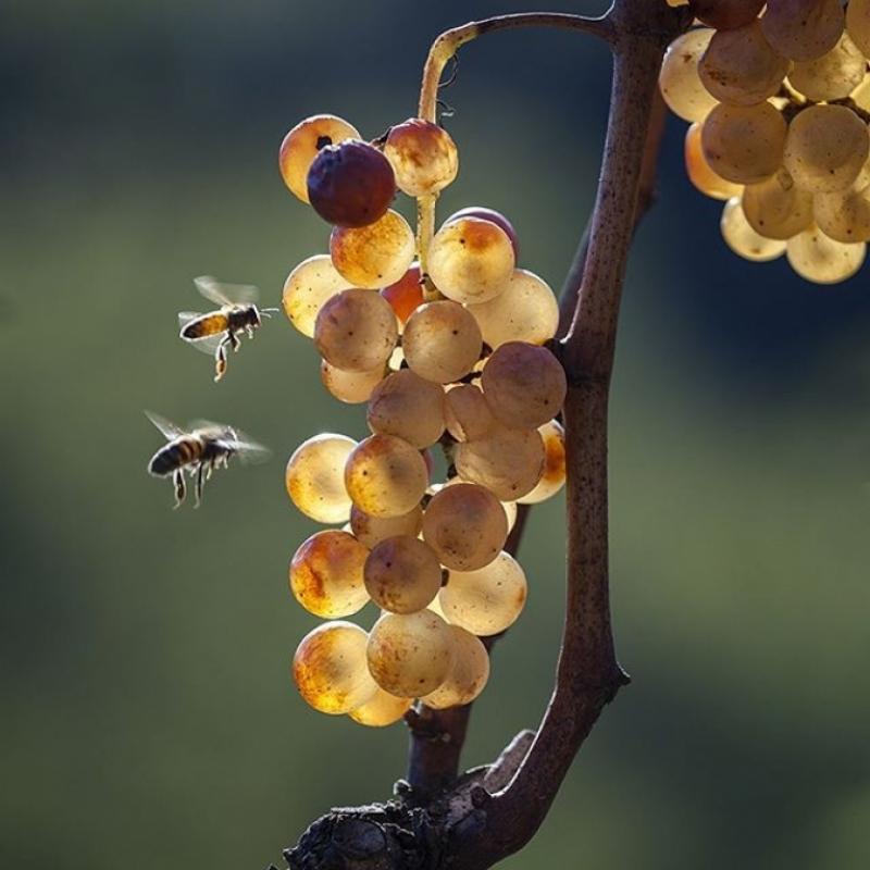 Il vino del futuro