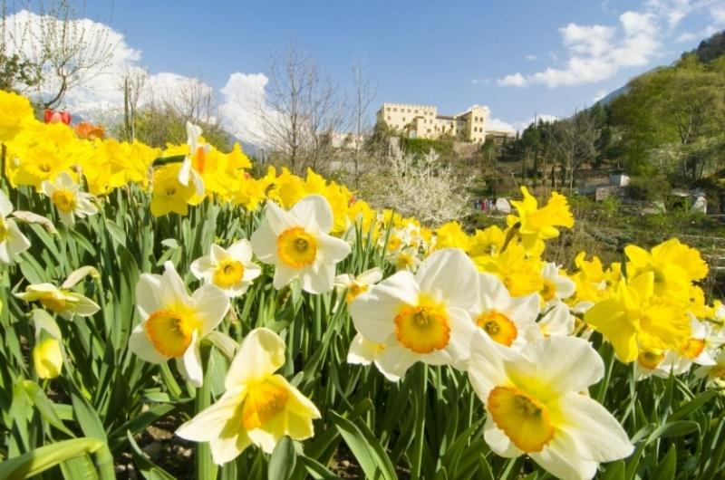 Voglia di primavera