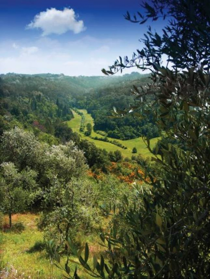 Paesaggio - foto Consorzio produttori olio delle Colline di Pisa
